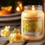 美国最受欢迎Yankee Candle高端香氛蜡烛