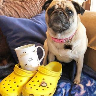 人手一双的舒适凉鞋 Crocs洞洞鞋反季折扣!